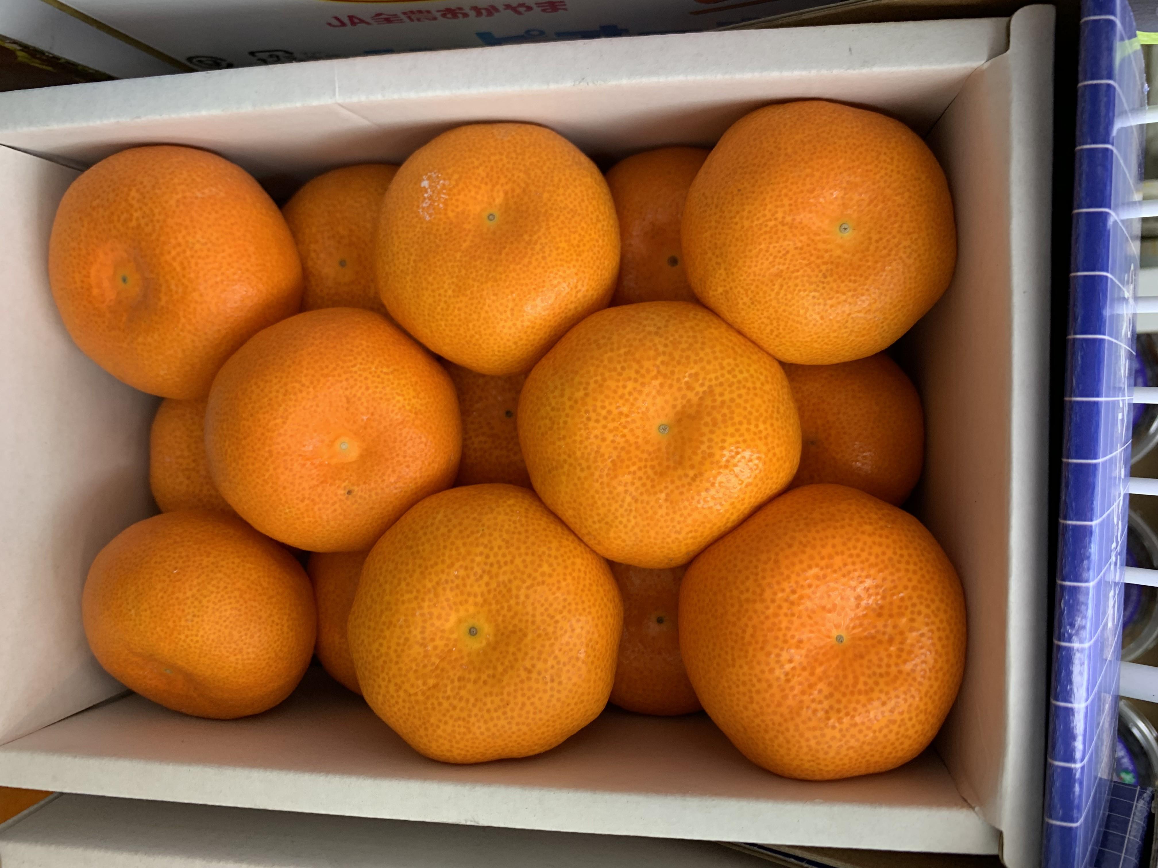 【立三】日本溫室蜜橘(15顆)