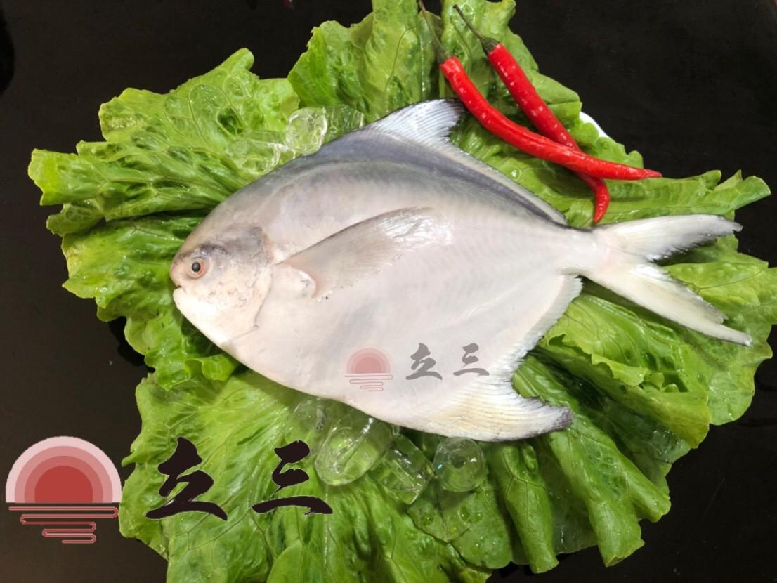 【立三】白鯧魚禮盒C(500~600g 2隻/組)